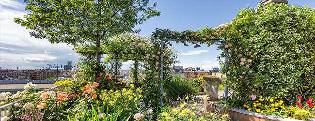 creating a rooftop garden terrace