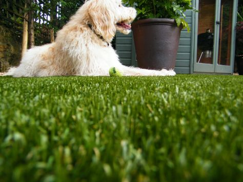Artificial Grass Pet
